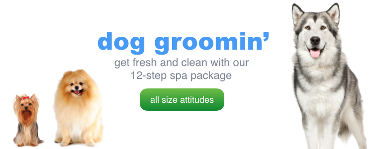 Dog Grooming Culver City